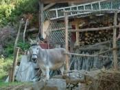 Ristos Pferd